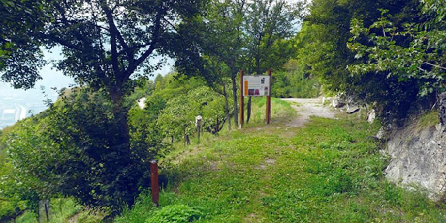 Maple Tree Trail