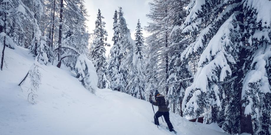 Randonnée à thème: «Traces dans la neige»