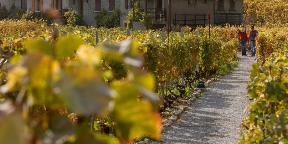 The Martigny Vineyard Trail