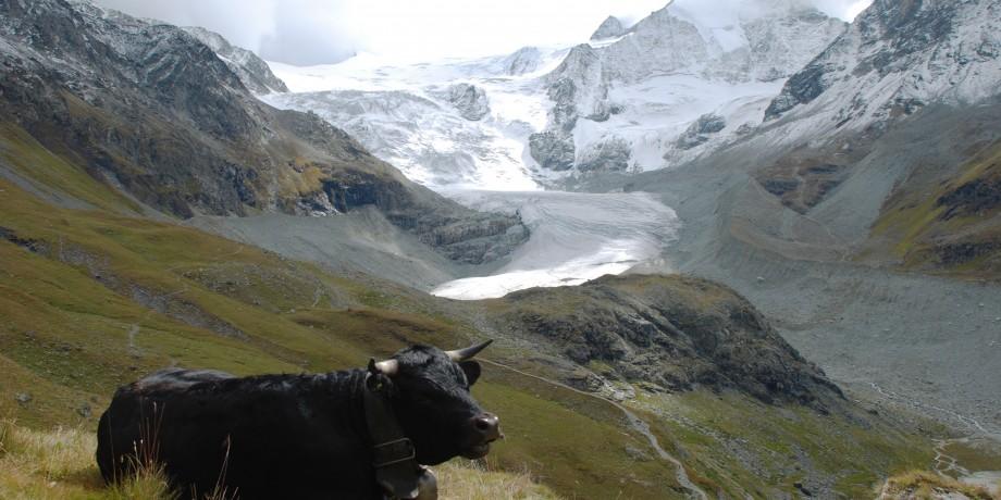 Moiry Gletscher