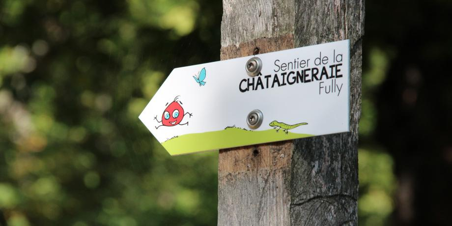 Educational trail in the chestnut forest