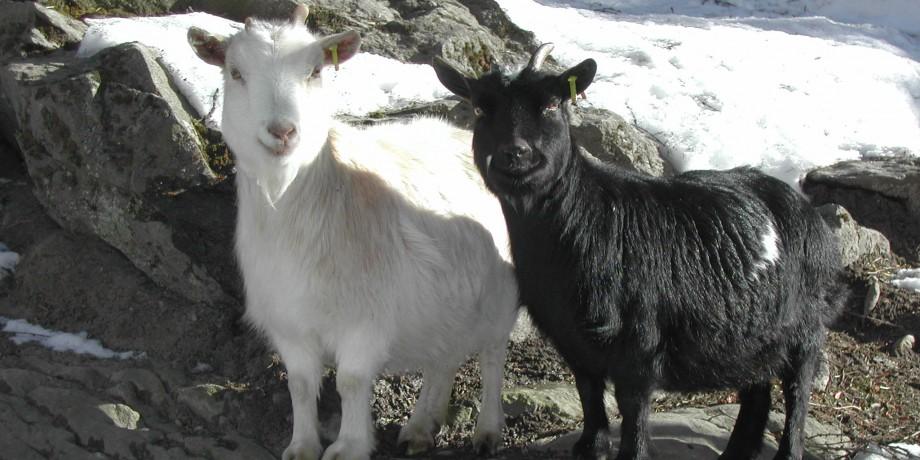 Parc animalier d'Aletsch