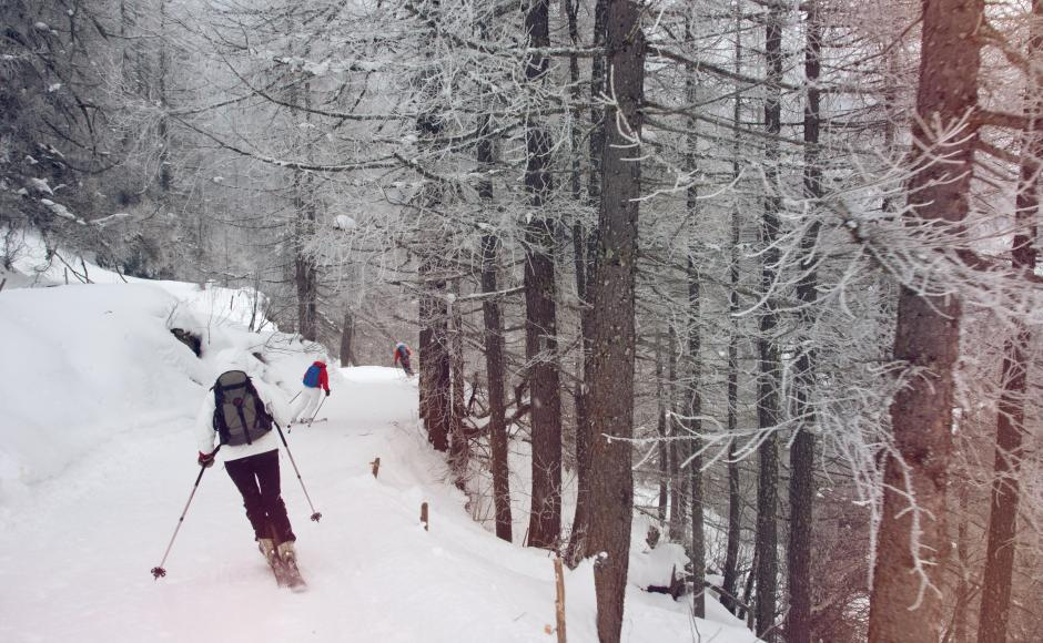 Ski-tourers descent through the forest in Binntal, Valais