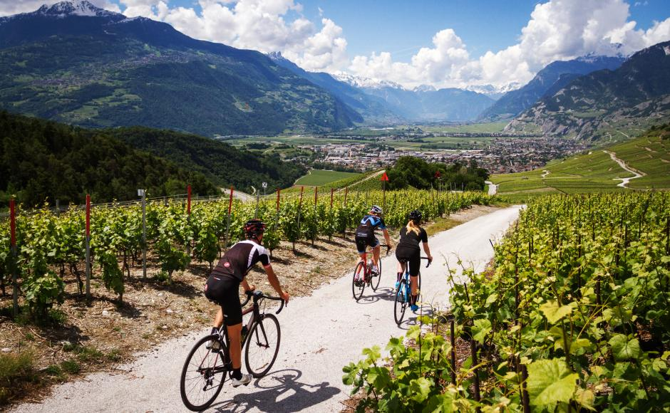 Road cycling in the vineyards, Valais Cycling Tour