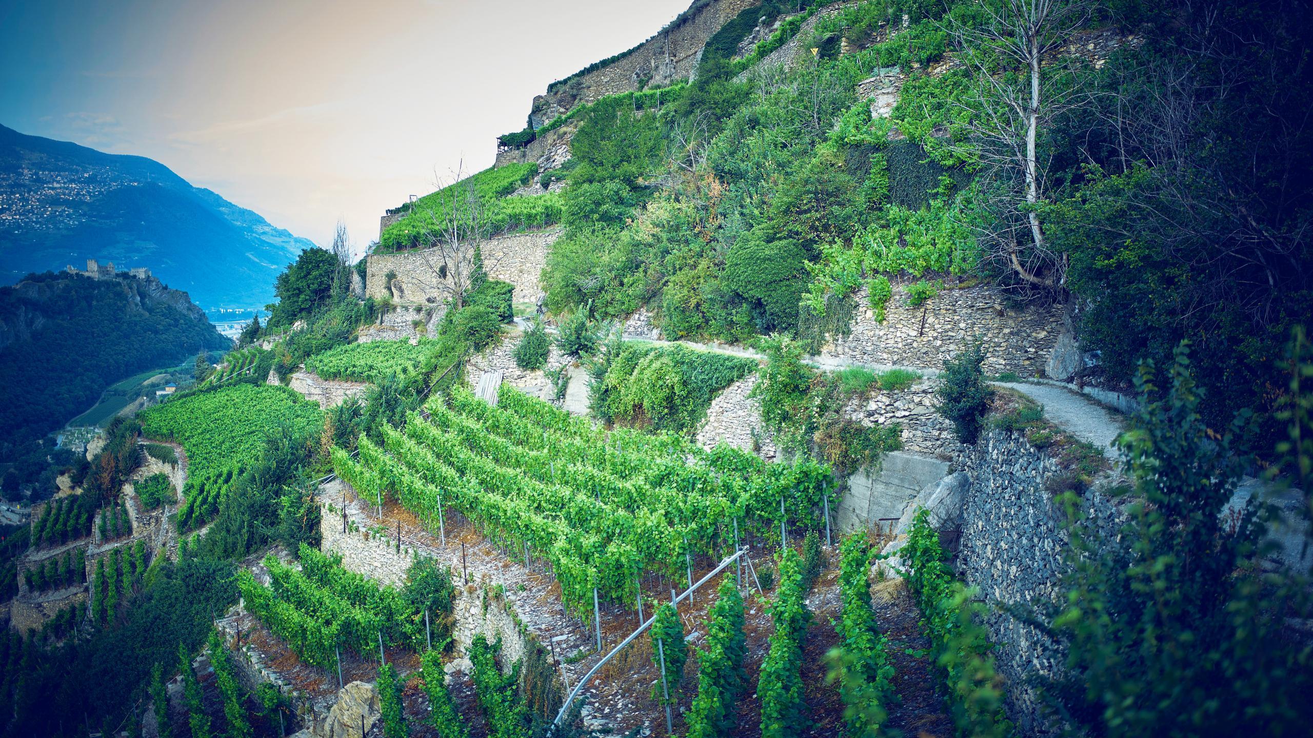 Accueil valais suisse for Jardin des vins 2016 sion