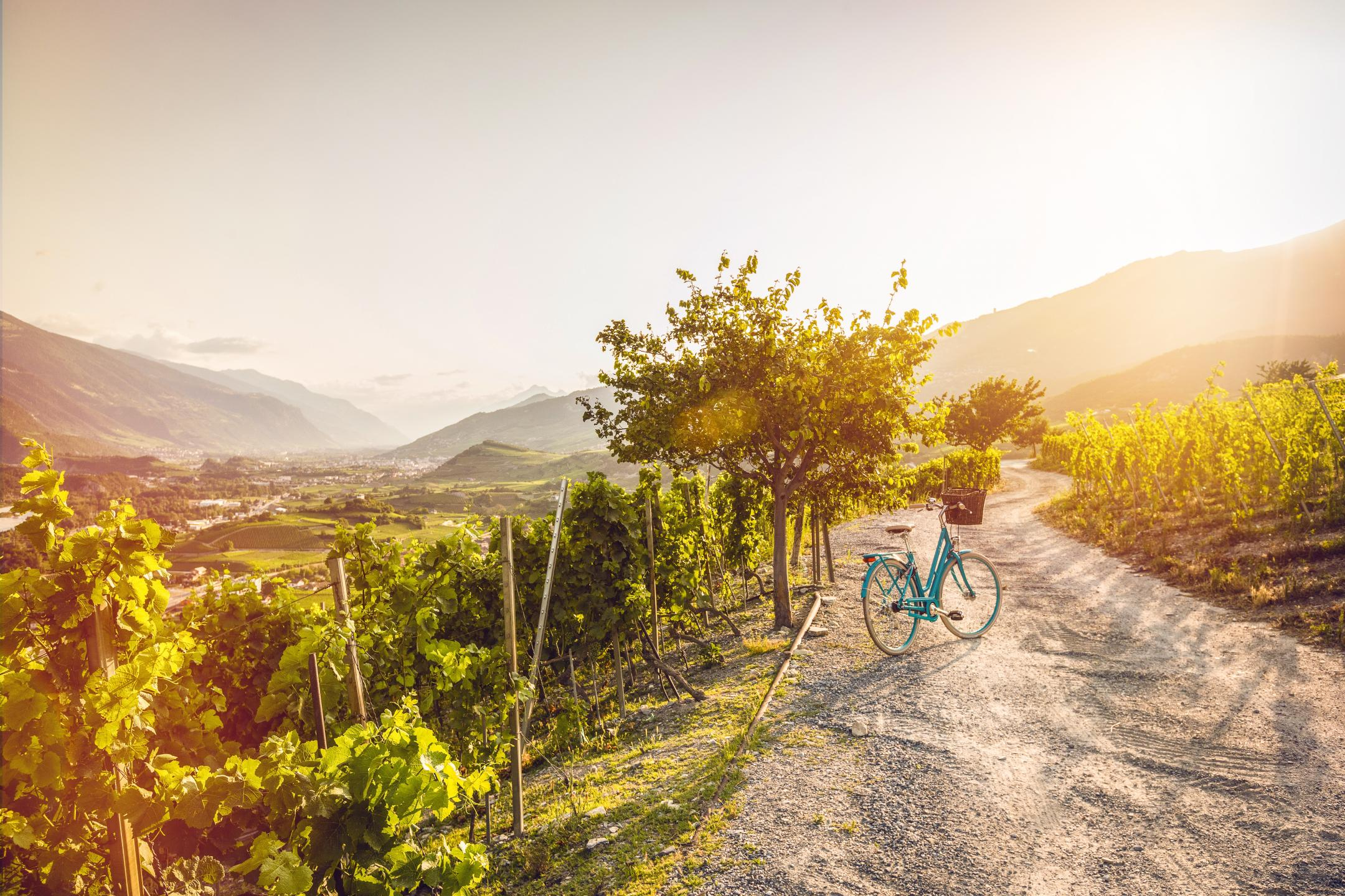 Image result for valais tourism images wine