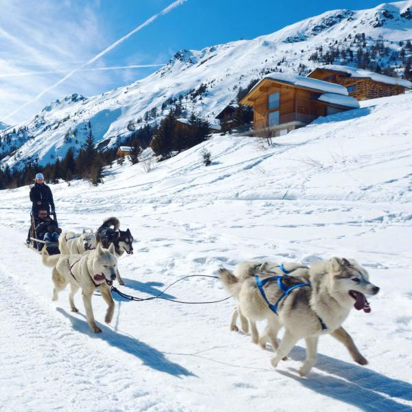 Sledge dog, in the background the village Thyon during winter, Valais