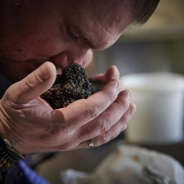 The chef smells fresh truffles from the region. Switzerland. Valais