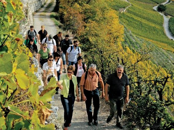 Petite Arvine, Cornalin, Rèze, or Heida: With a team of 16 wine guides your hike through the vineyards will become a real event, Valais
